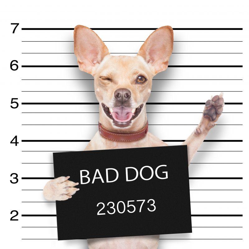 Pet Friendly Apartment Deals